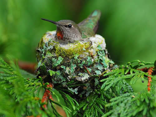 Help The Hummers!