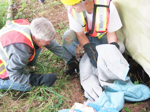 animal-rescue-injured-eagle
