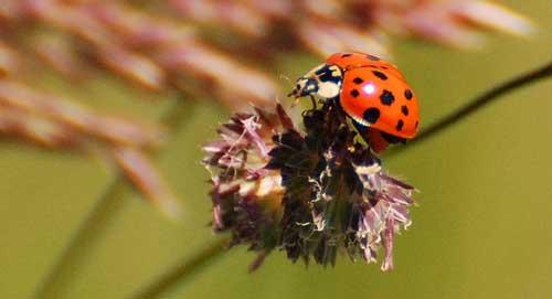 wildlife-lady-bug-heaven