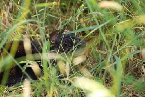 wildlife-otter-youth-hiding-grass